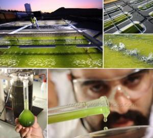 www.lookatsciences.com_biocarburant