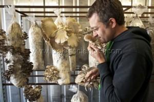 Culture de champignons