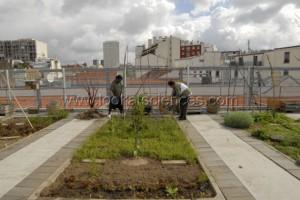 Jardin collectif sur terrasse en ville