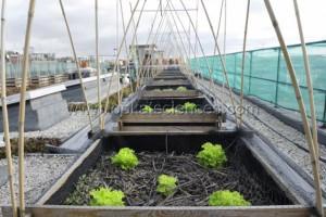 Potager experimental sur le toit de AgroParisTech