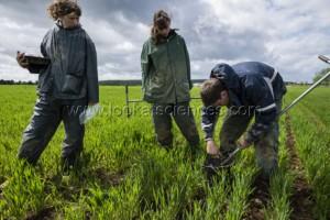 Recherche en agroforesterie