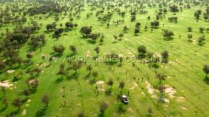 Grande muraille verte du Senegal